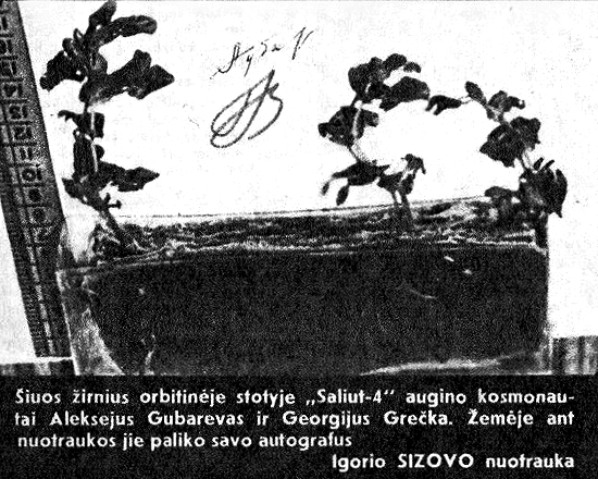 """Žirniai, išauginti orbitinėje stotyje Saliut-4. """"Švyturys"""" Nr.22/1976"""