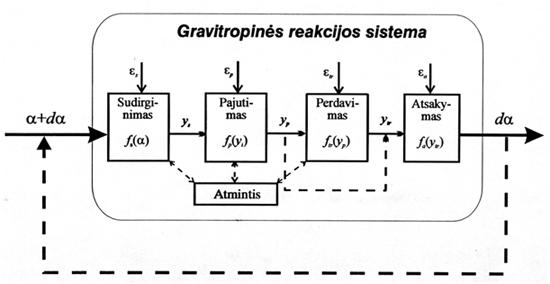 Alvido Stočkaus modifikuota gravitropinės reakcijos schema (Rawitsher, 1932), kaip matematinio modeliavimo pagrindas